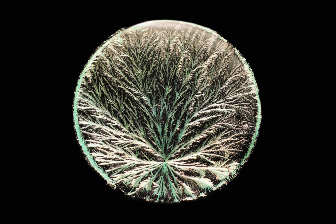 Mikroskopisches Kristallisationsbild Mykoplan Cordyceps